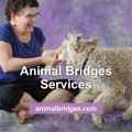 animal-bridges-services