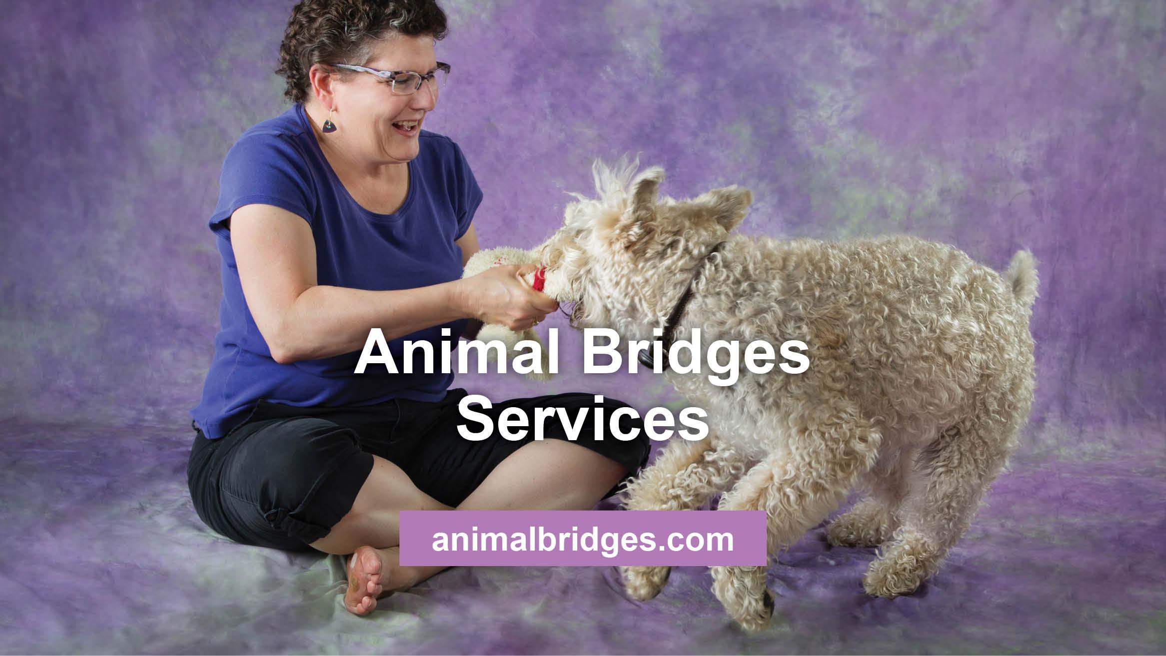 Article about Animal Bridges' Services