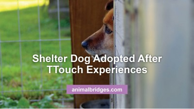 shelter-dog-adopted