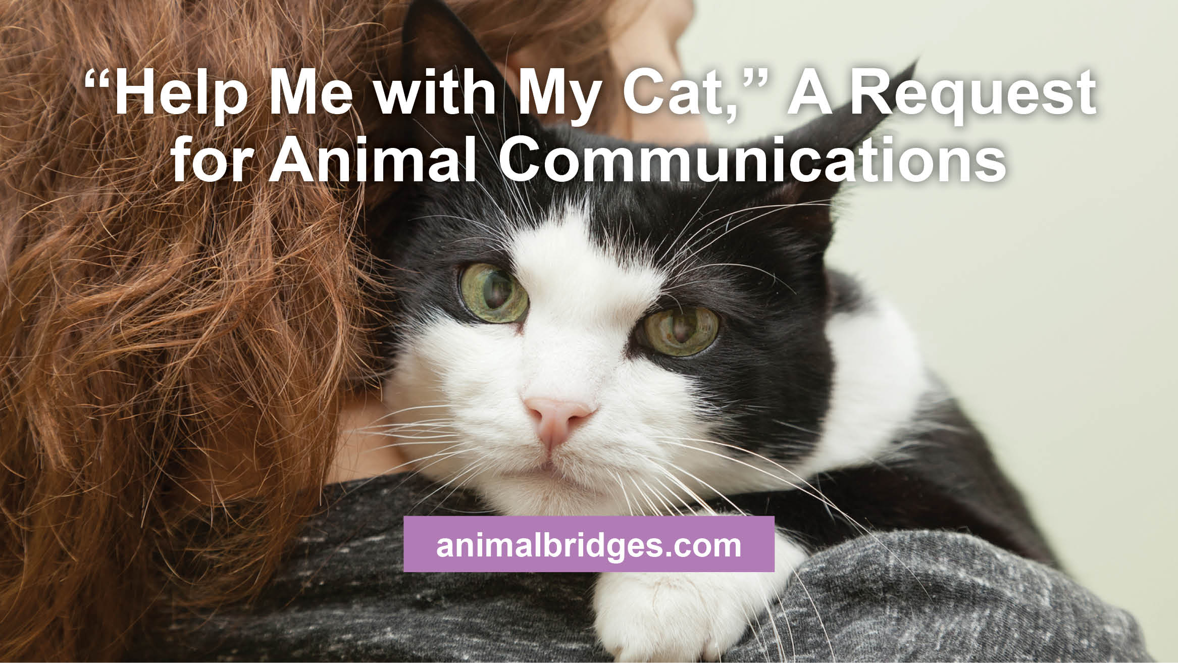help-me-with-my-cat