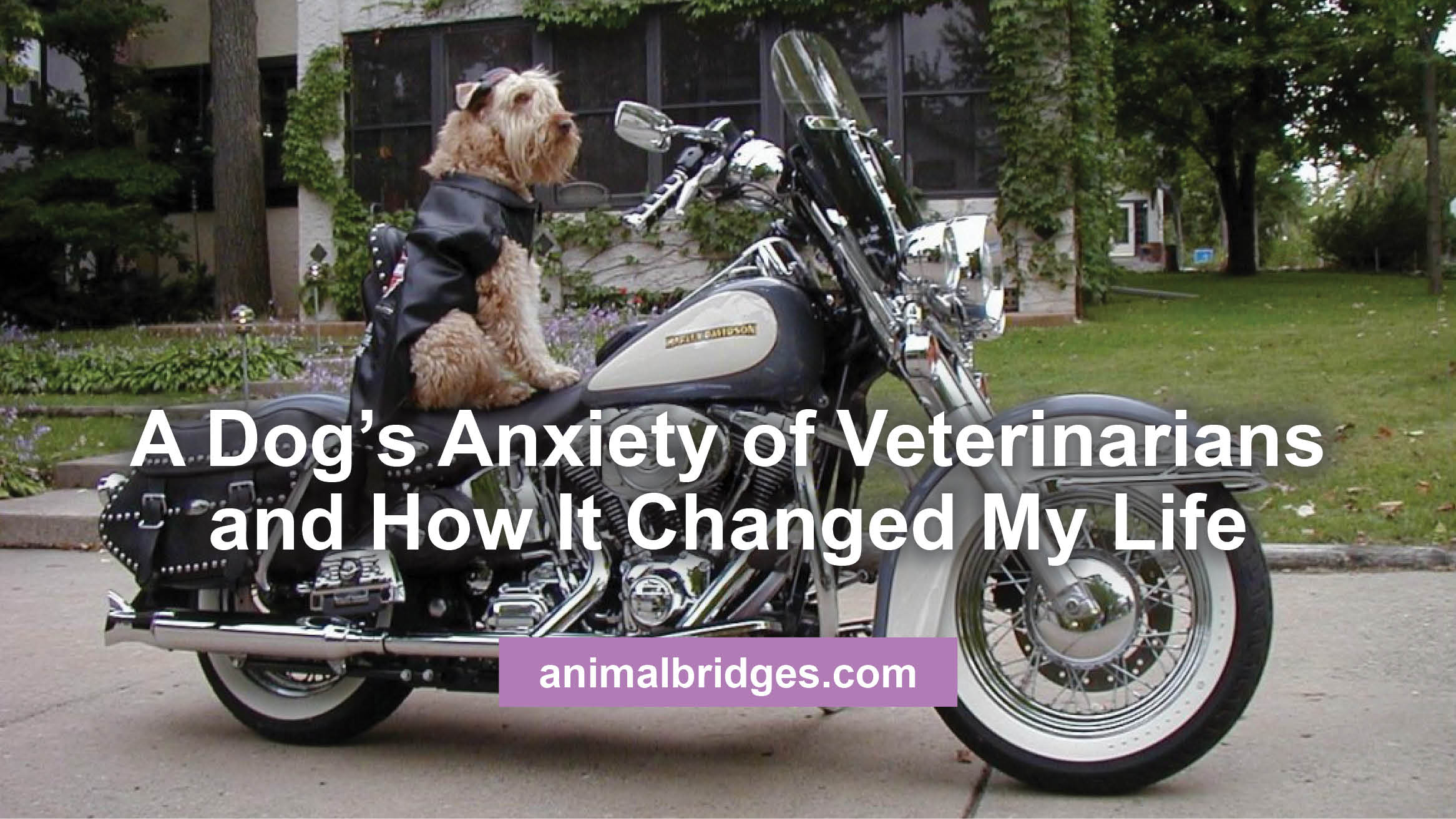 A Dog's Anxiety of Veterinarians and How It Changed My Life