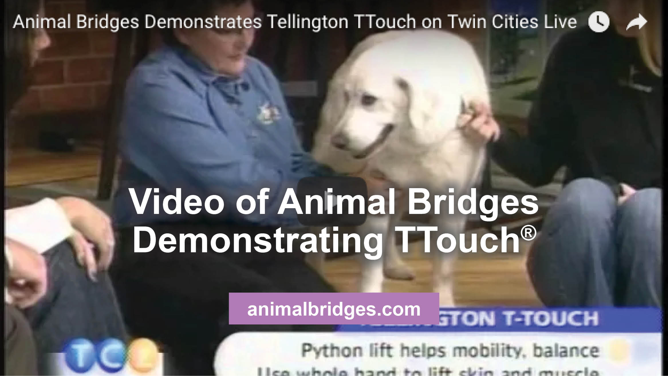 Video of Animal Bridges Demonstrating TTouch®