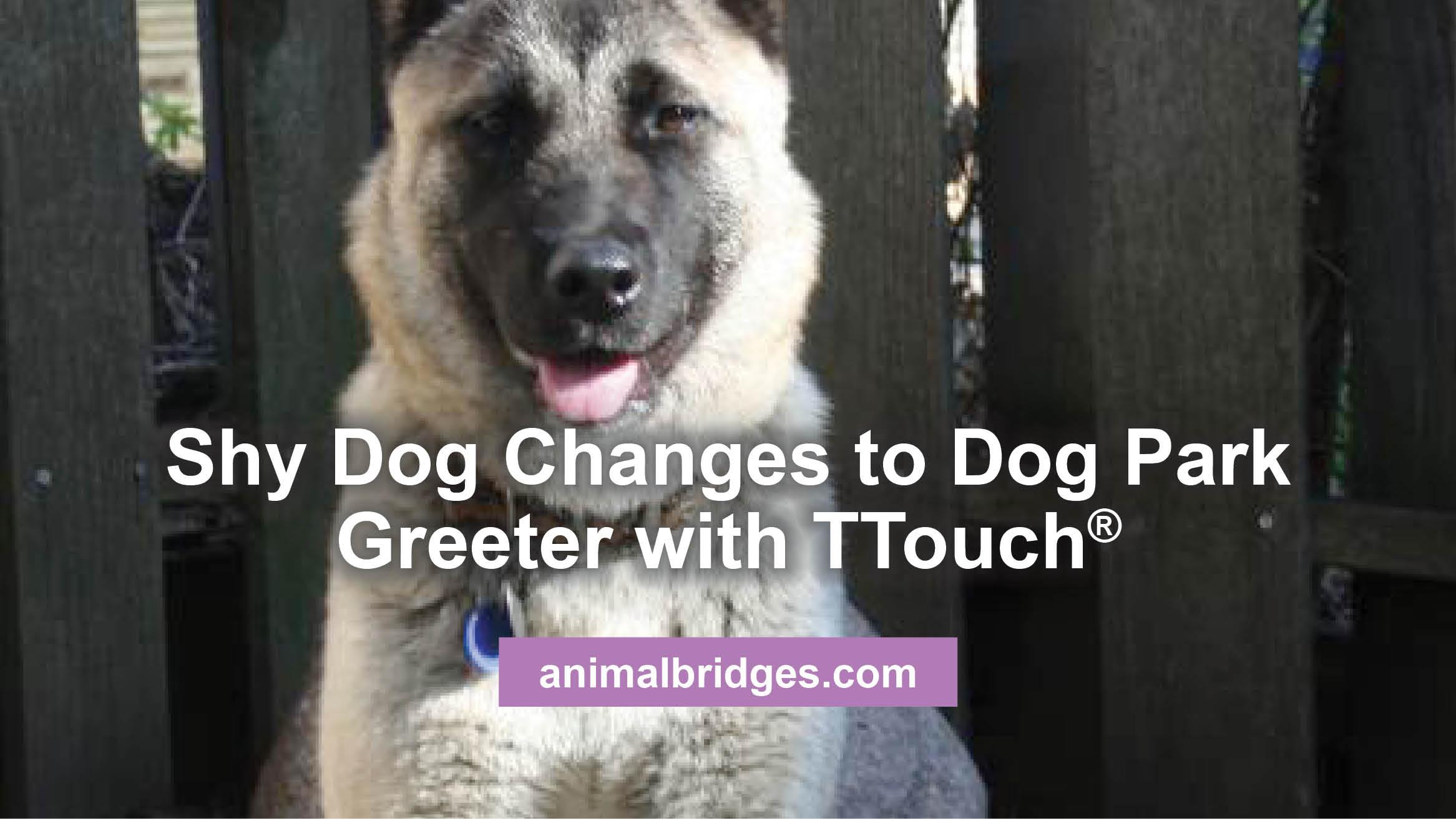 shy-dog-changes