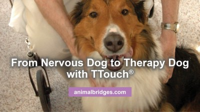 nervous-dog-to-therapy-dog