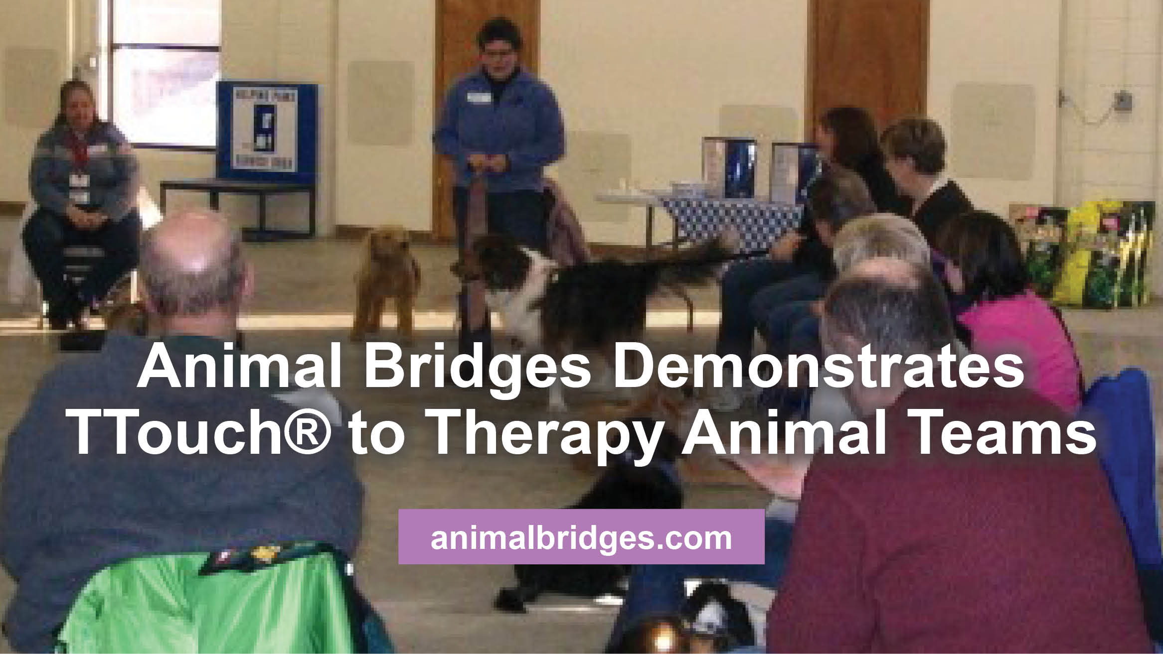 Animal Bridges Demonstrates TTouch® to Therapy Animal Teams