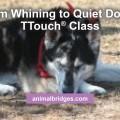 whining-dog