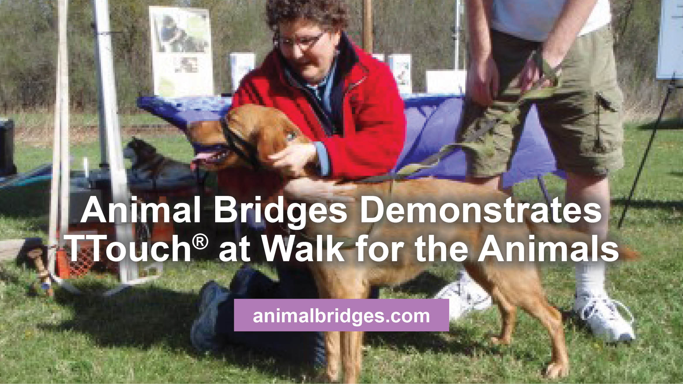 Animal Bridges Demonstrates TTouch® at Walk for the Animals