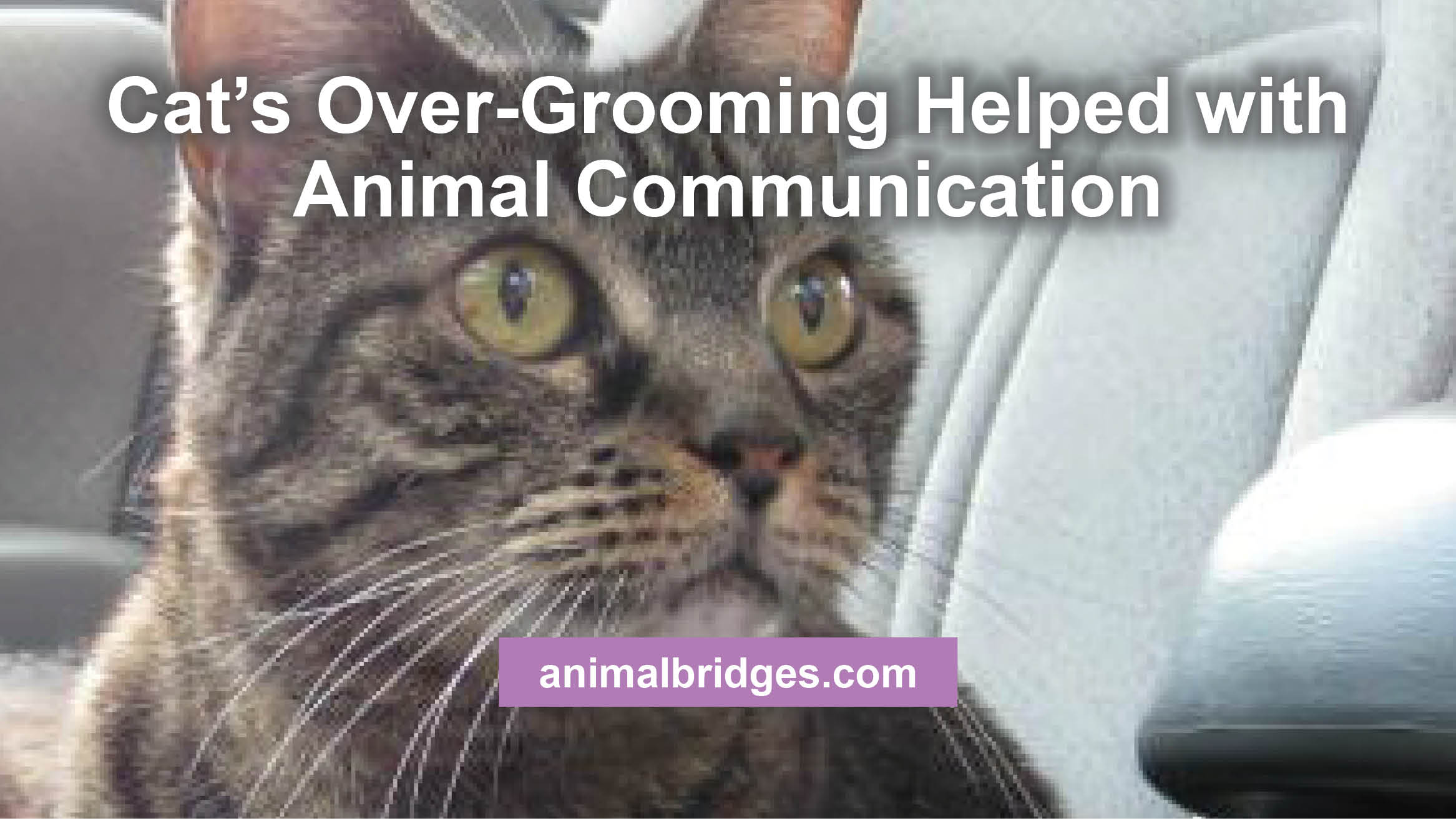 cats-overgrooming