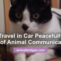 cat-travels