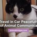 cat-travels