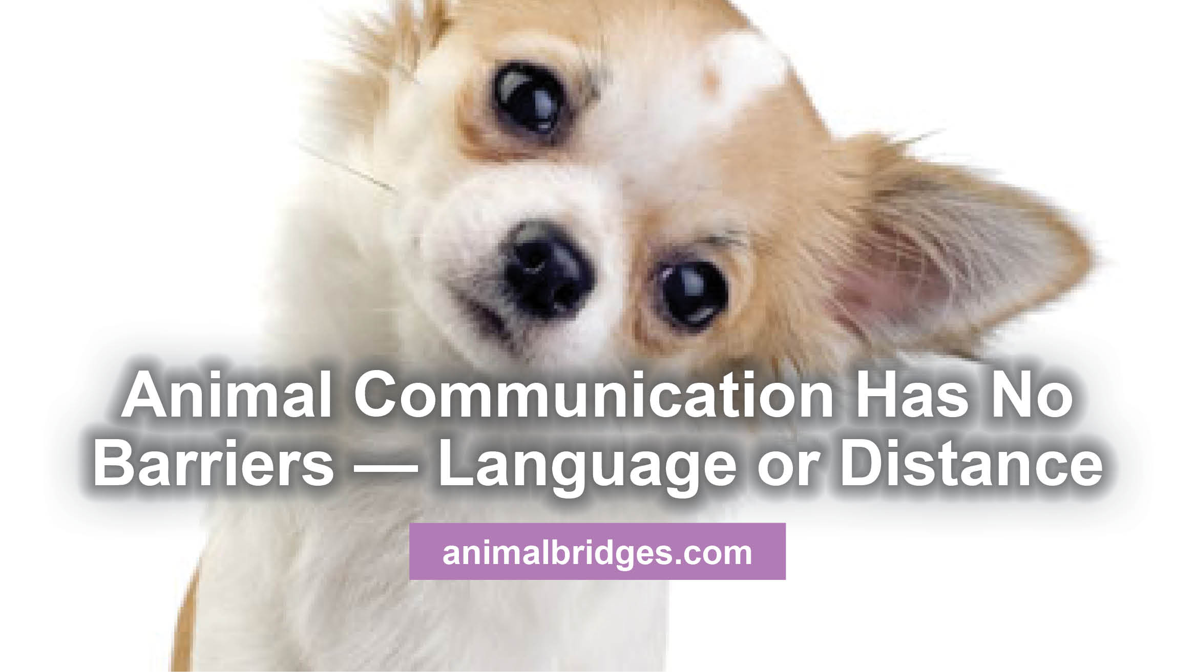 Animal communication has no barriers - language or distance