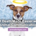 Pet death made easier with animal communications.