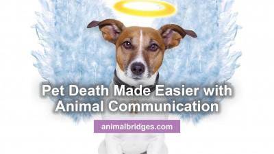 pet-death