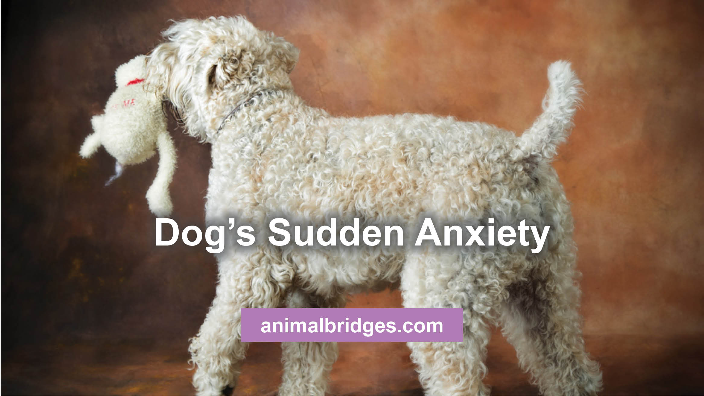 dog's sudden anxiety