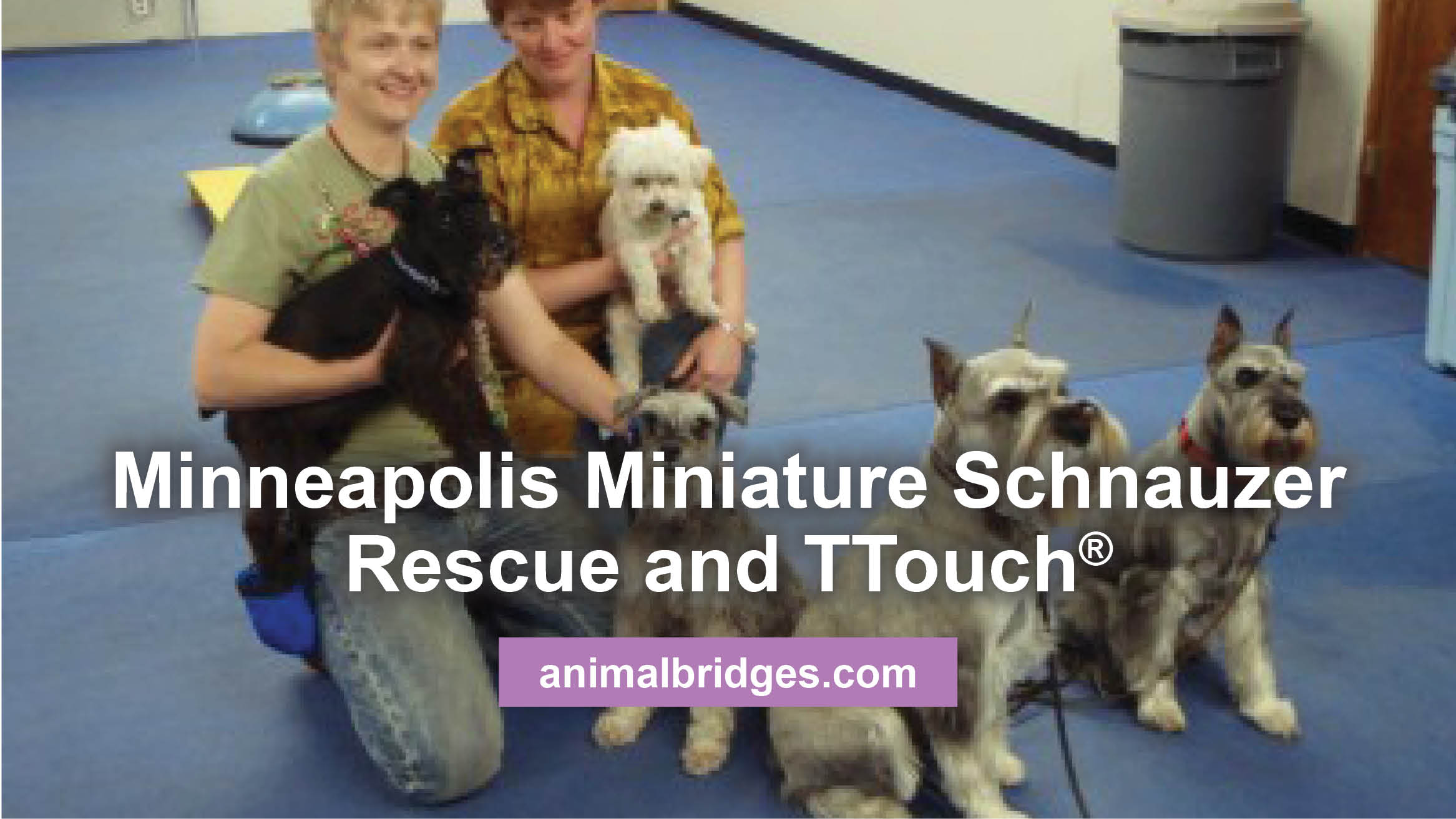 Minneapolis Miniature Schnauzer Rescue and TTouch®