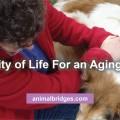 Quality of life for an aging dog