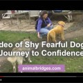 video-of-shy-dog