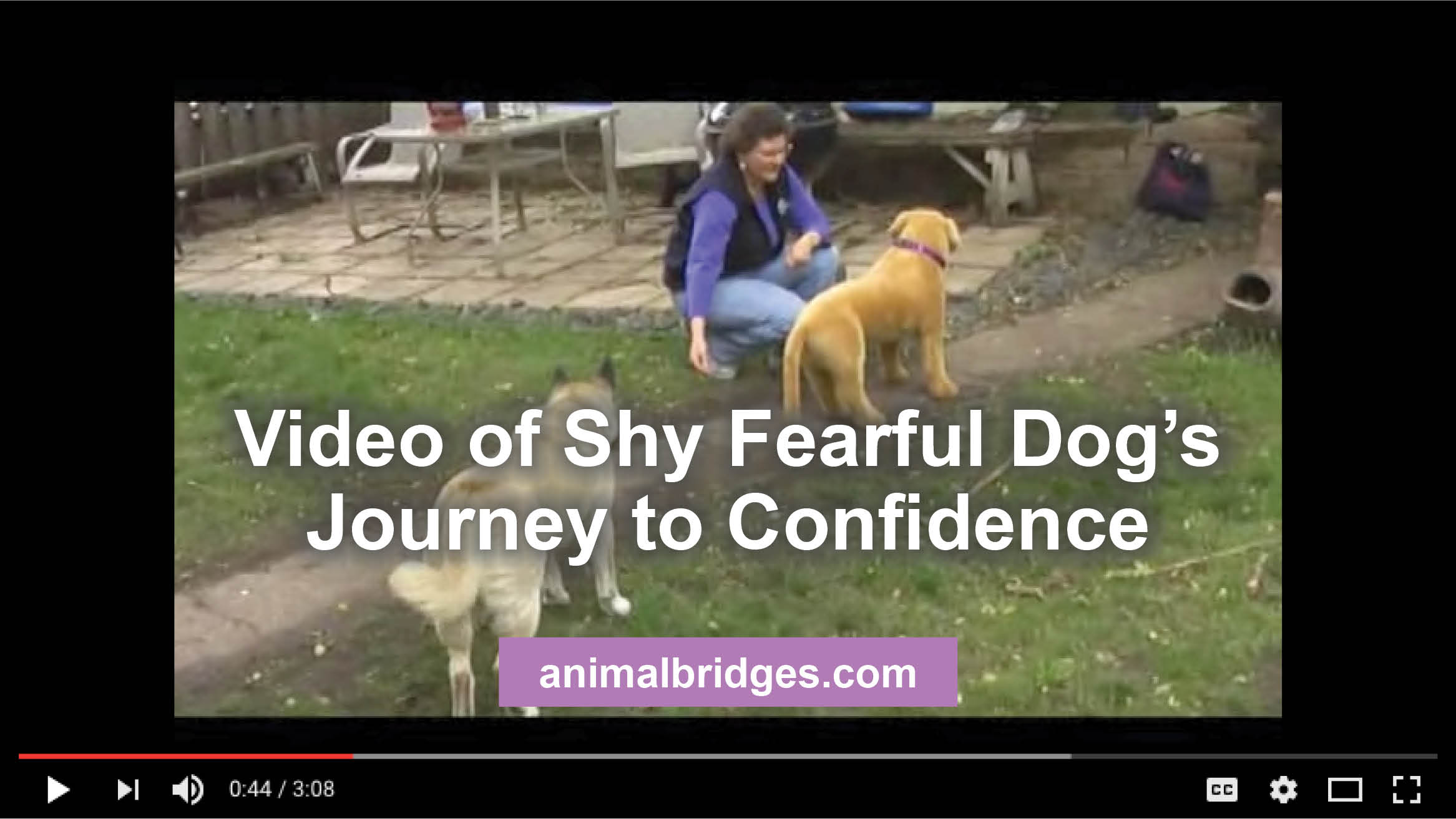 Video of Shy Fearful Dog's Journey to Confidence