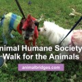 walk-for-dogs