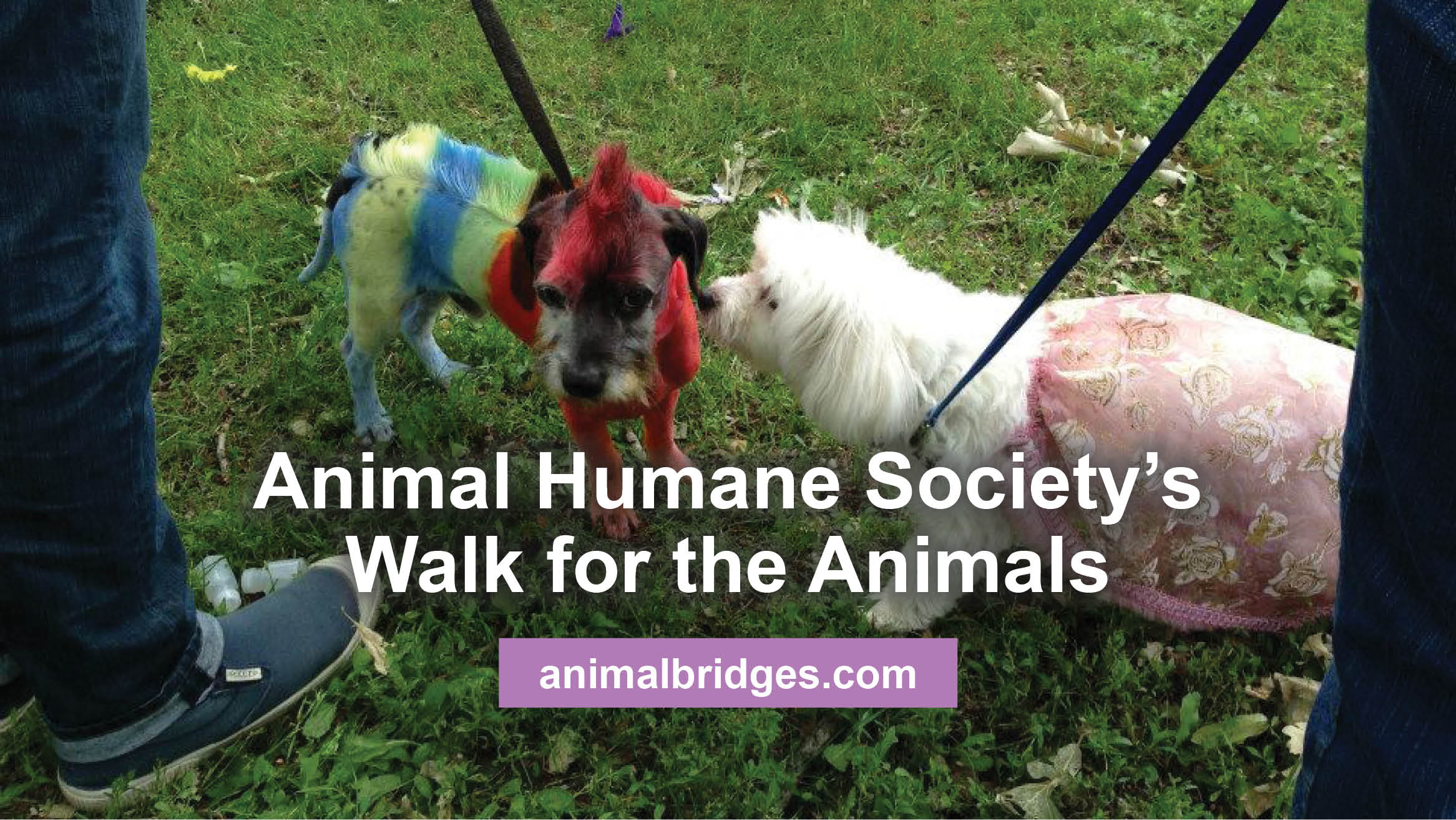 Animal Humane Society's Walk for the Animals