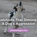 dogs-aggression