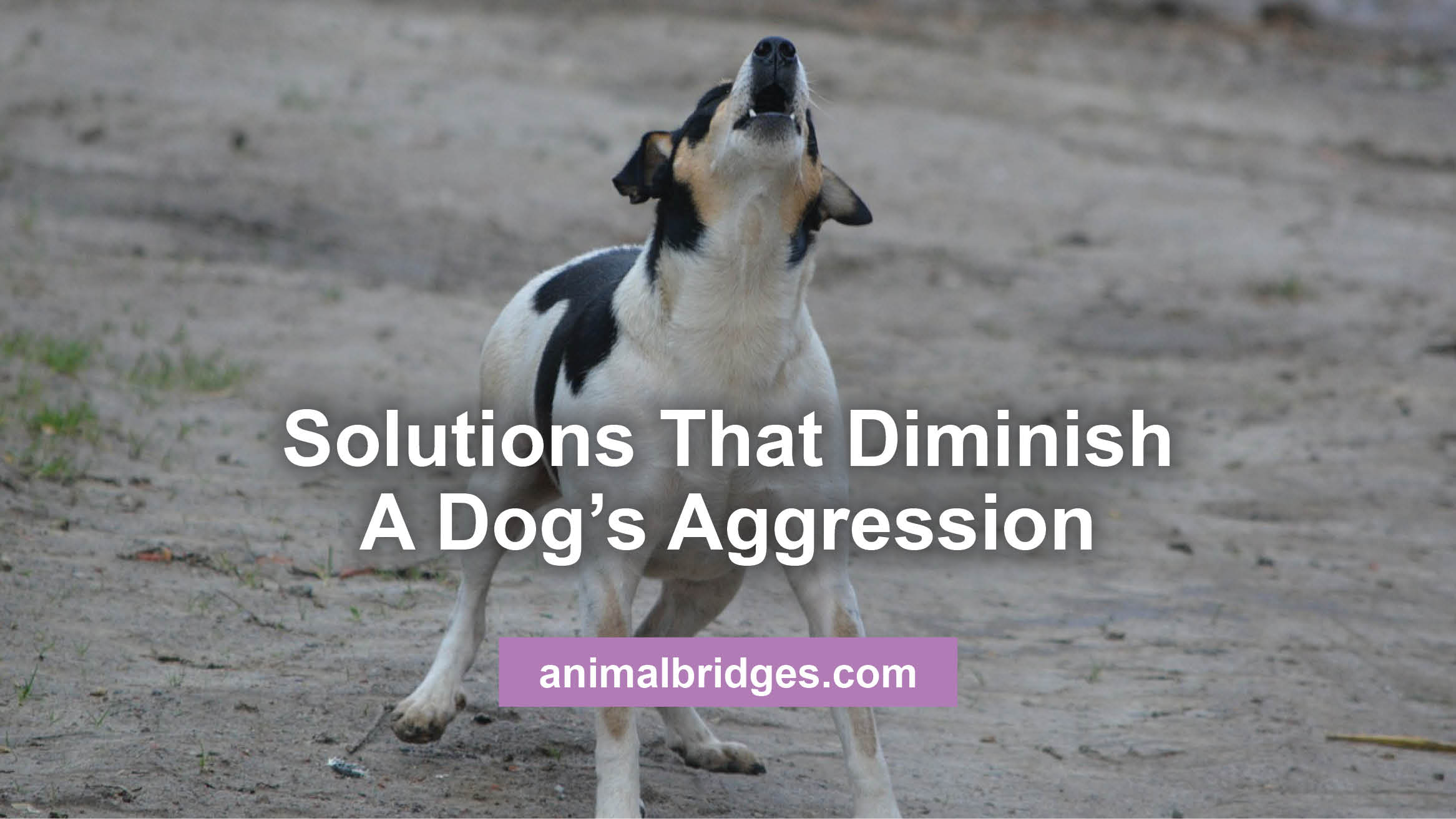 dogs-aggression