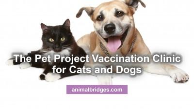 pet-project