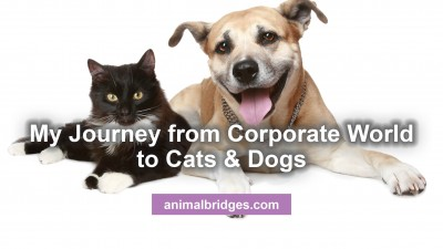 corporate-world-to-cats-and-dogs