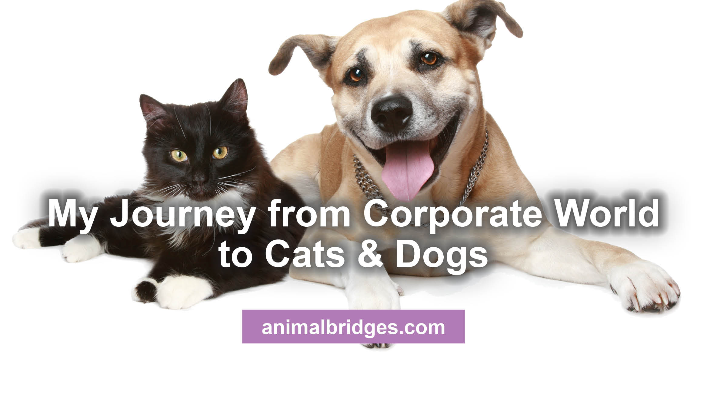 My Journey from Corporate World to Cats & Dogs