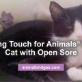 cat-with-open-sores