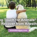 dog-recovery