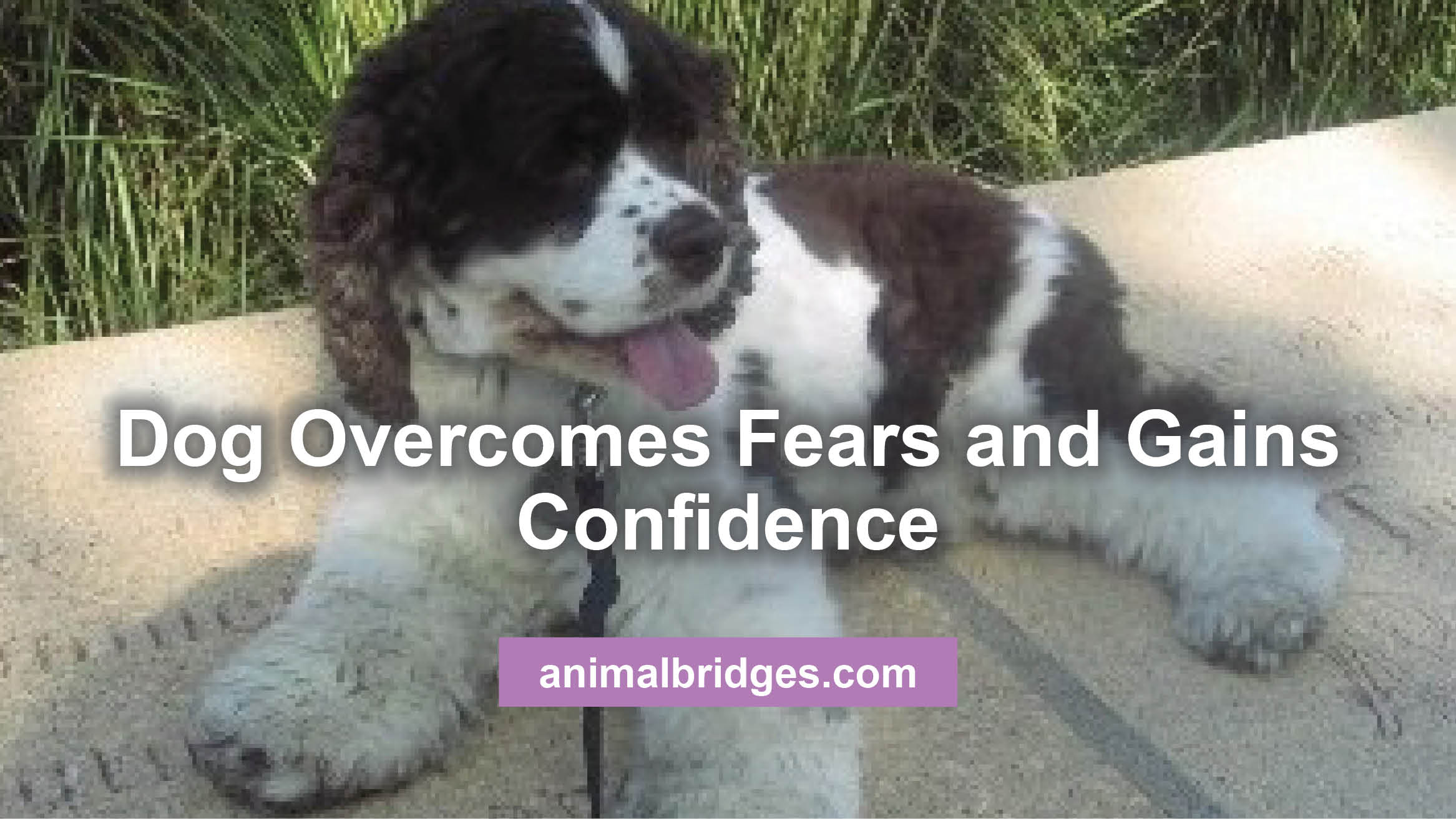 dog-overcomes-fears