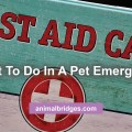 pet-emergency