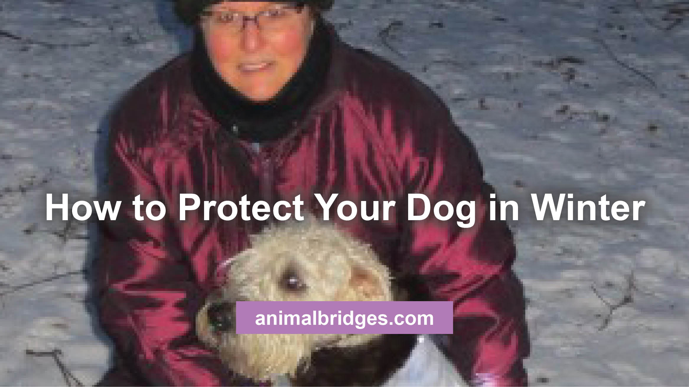 protect-dog-in-winter