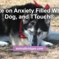 Update on Anxiety Filled Whining Dog, and TTouch®