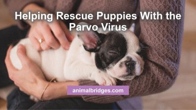 helping-rescue-puppies