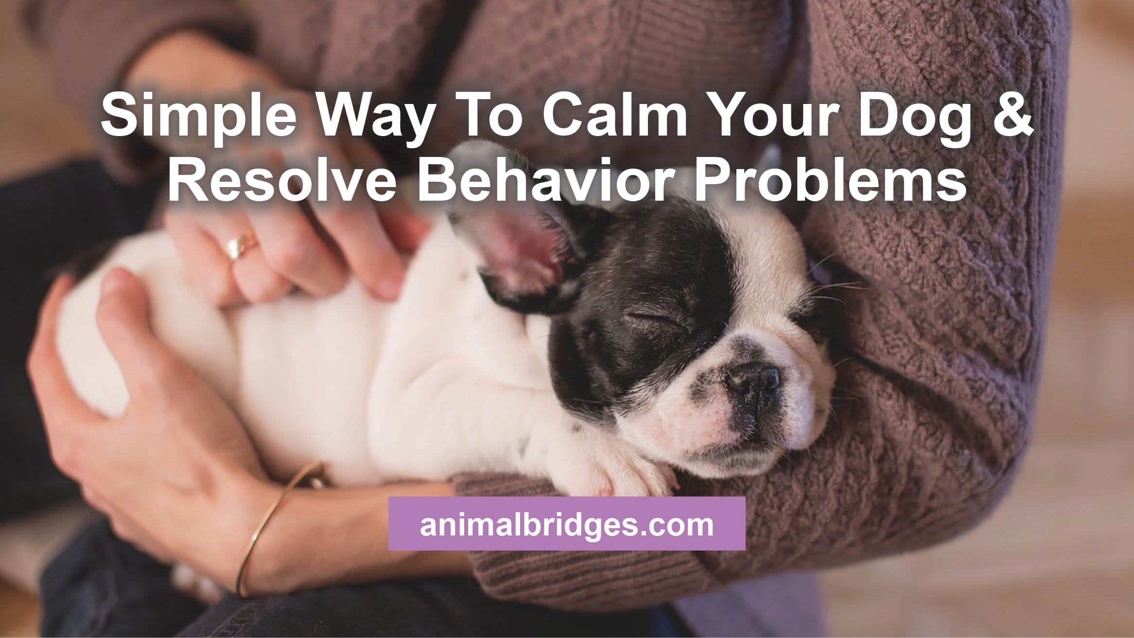 Simple way to calm your dog & resolve behavior problems