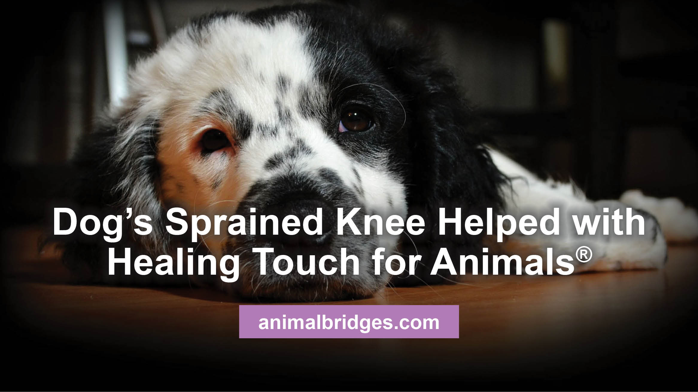 dogs-sprained-knee