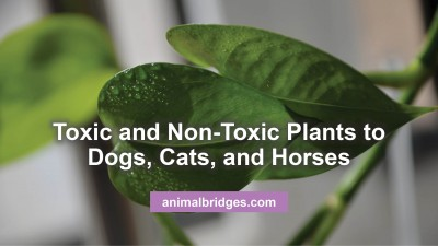 Toxic Plants To Horses Archives Animal Bridges