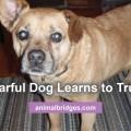 fearful-dog