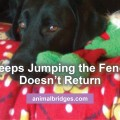 dog-jumps-fence