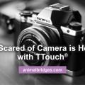 dog-scared-of-camera