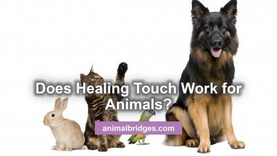 hta-for-animals