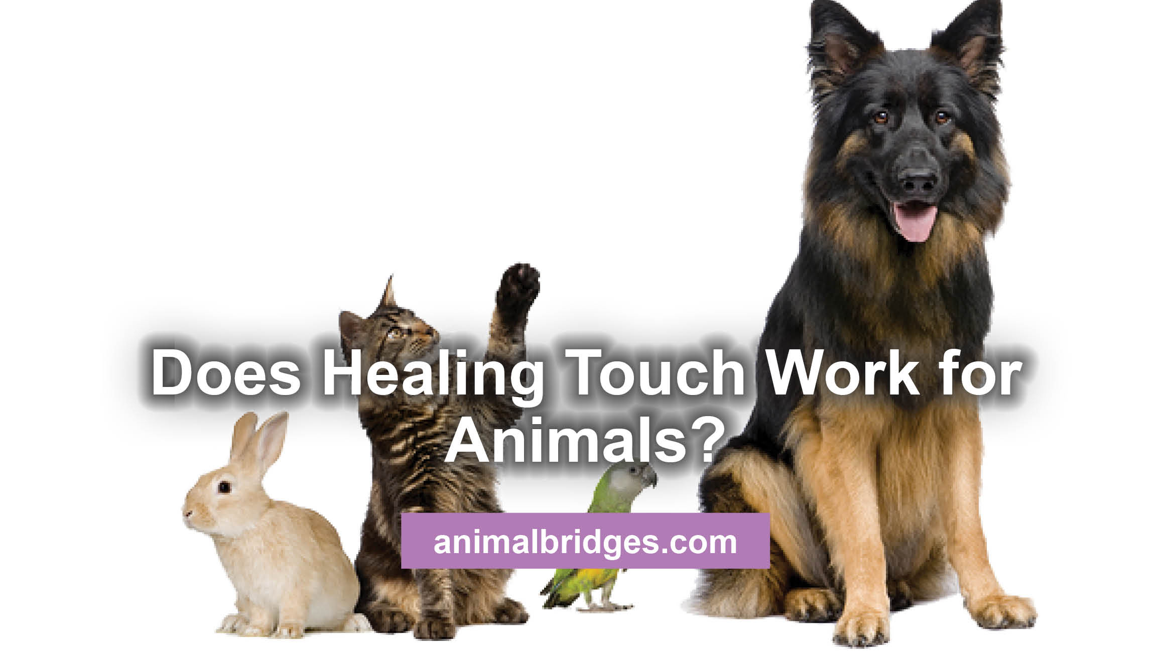 Does Healing Touch Work for Animals?