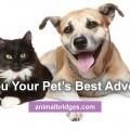 pets-best-advocate
