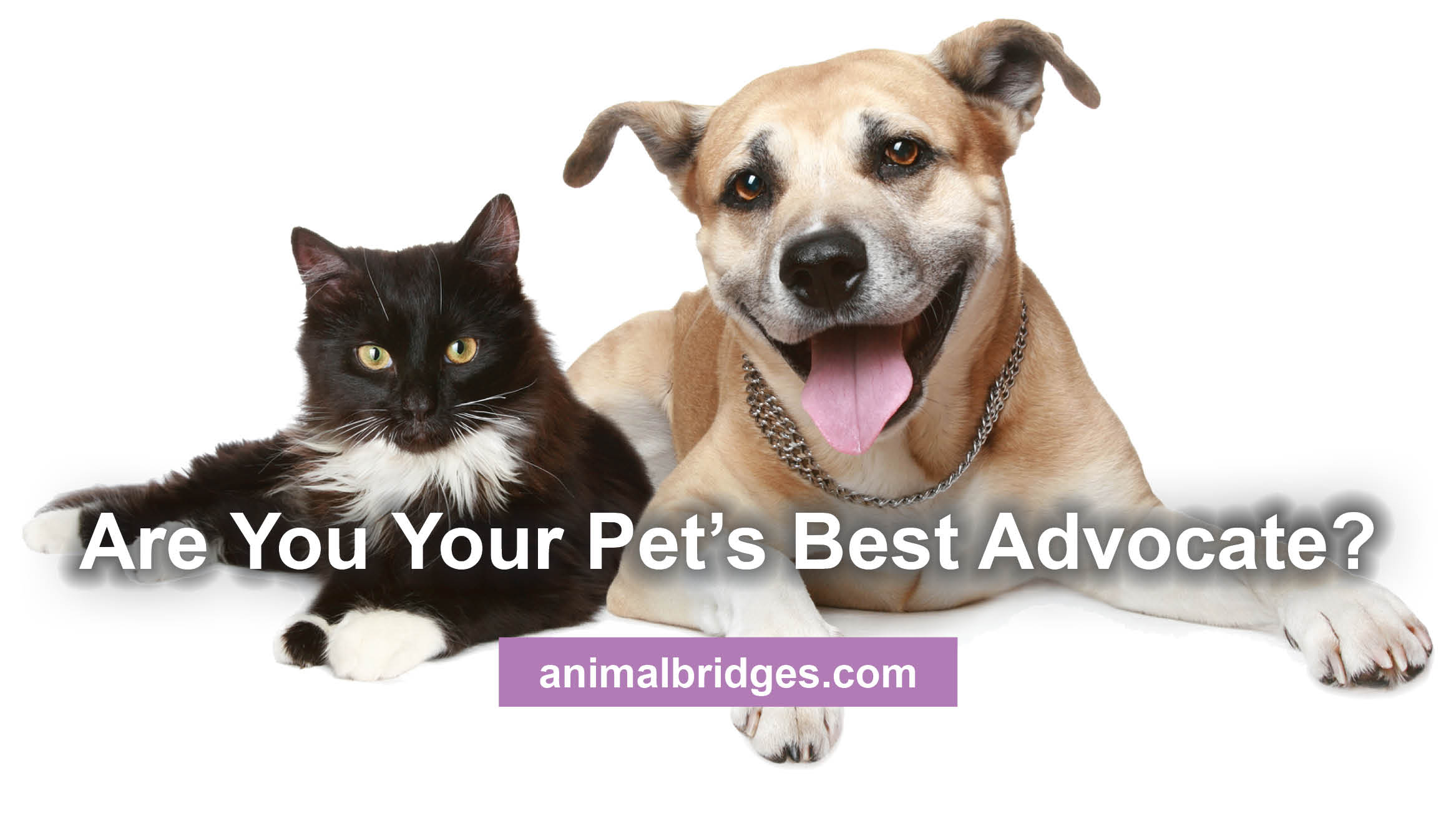 Your Pet's Best Advocate