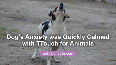 dogs-anxiety2