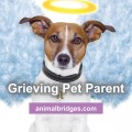 greiving-pet-parent