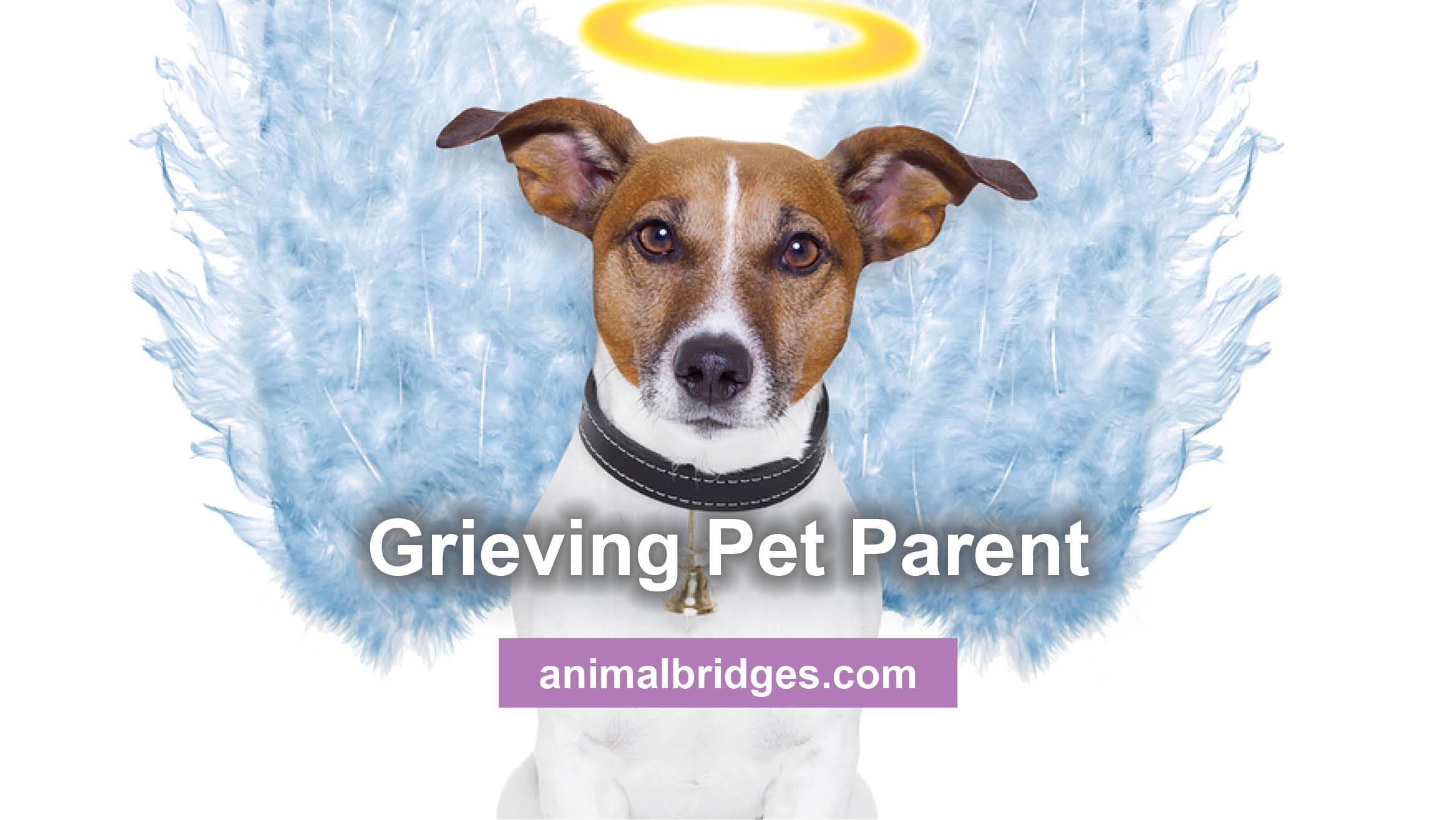 greiving-pet-parent