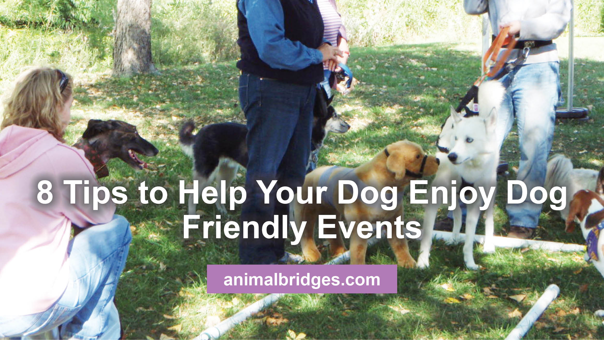 8 Tips to Help Your Dog Enjoy Dog Friendly Events